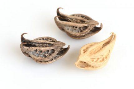 bienfaits de L'harpagophytum