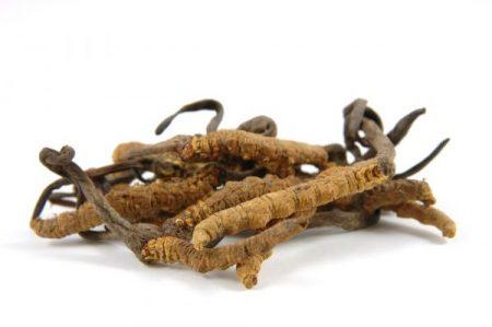 bienfaits du cordyceps sinensis