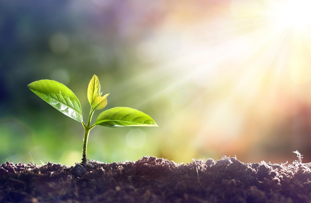 pouvoir des plantes
