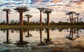 poudre du baobab